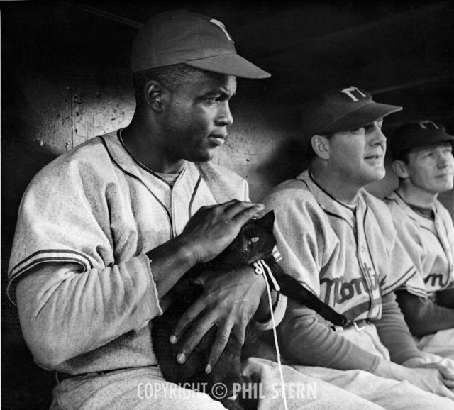 Jackie Robinson in the midst of filming The Jackie Robinson Story, 1949.